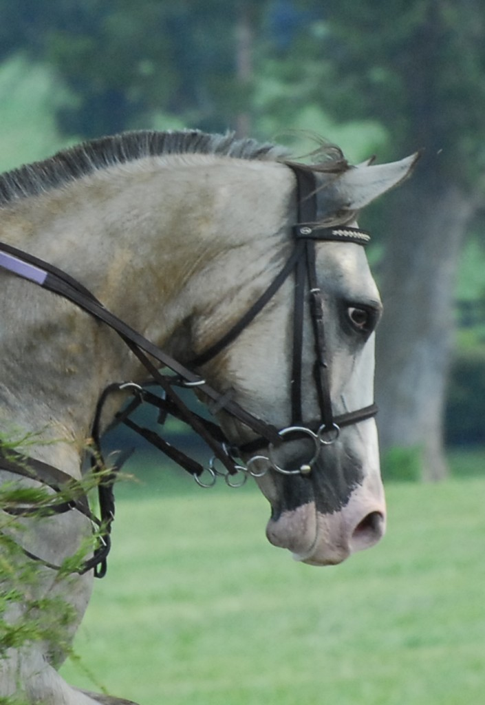 A cavesson noseband with a 3-ring gag snaffle and a running martingale.