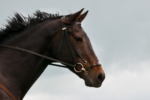 A Kineton noseband with a loose ring snaffle.