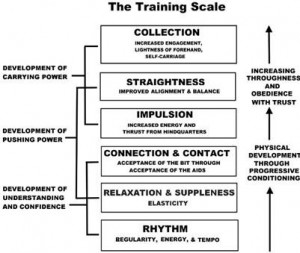 The Dressage Training Scale per USPC