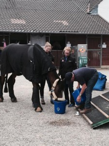 So you think you want to be a professional groom?